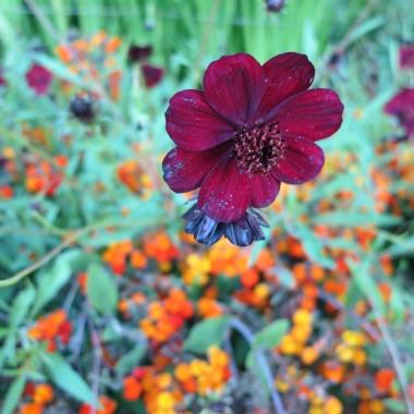 Buchart Gardens I